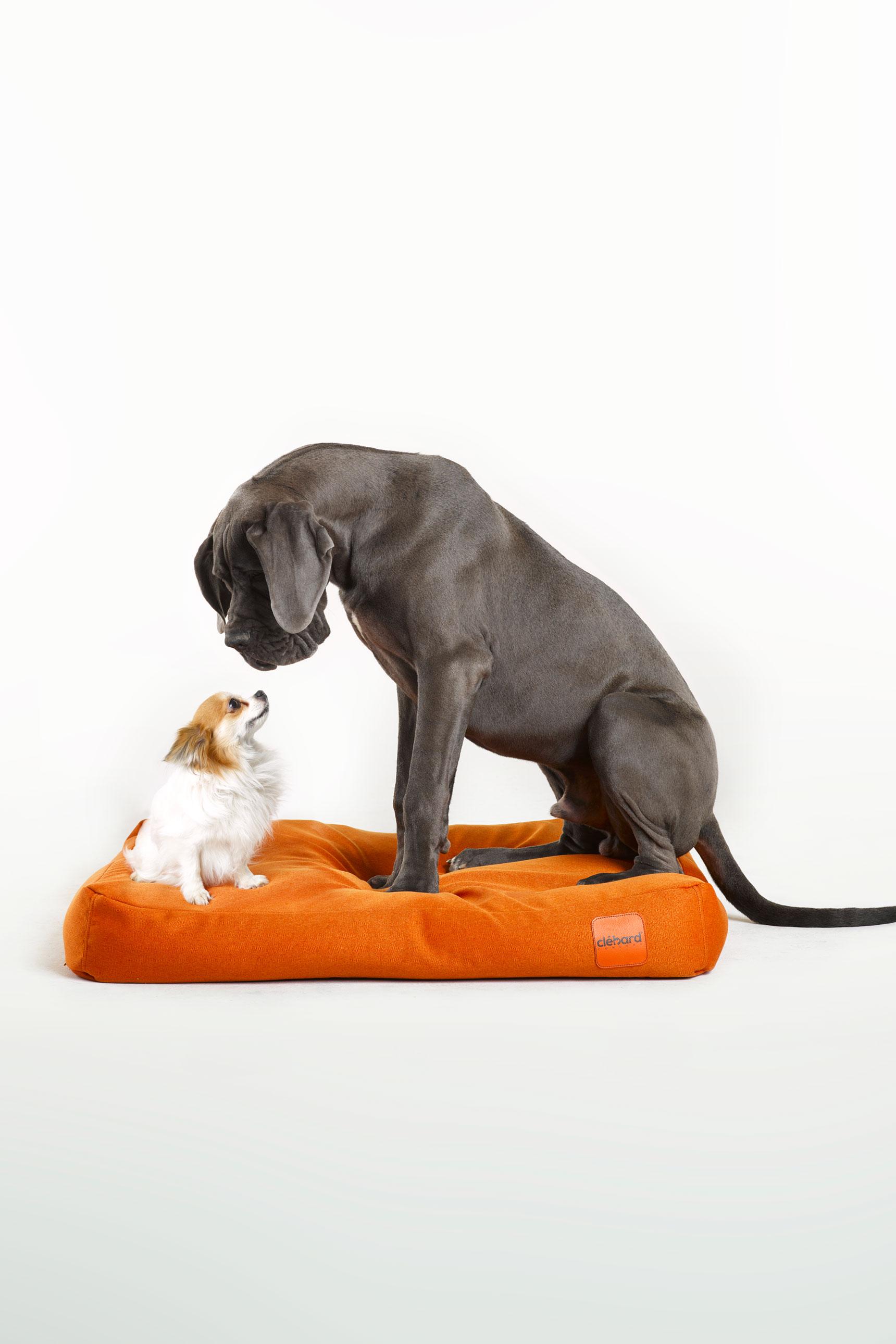 Meilleur coussin pour chien Eco-responsable de Luxe