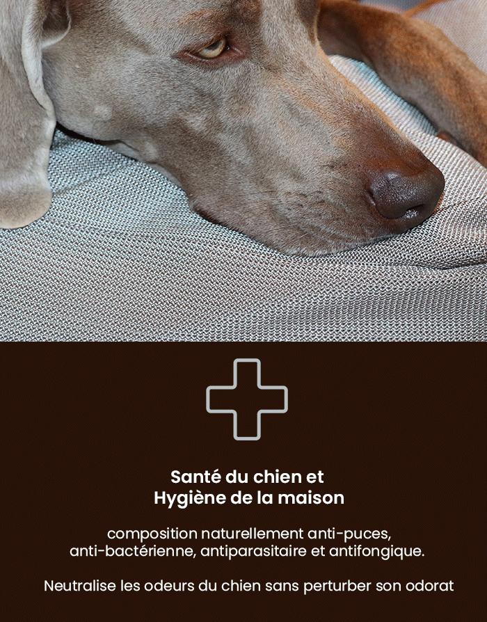 Lit pour chien anti-bactérien, anti-fongique, hypo-allergénique, anti-puces