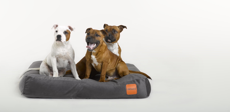 in dog's bedding
